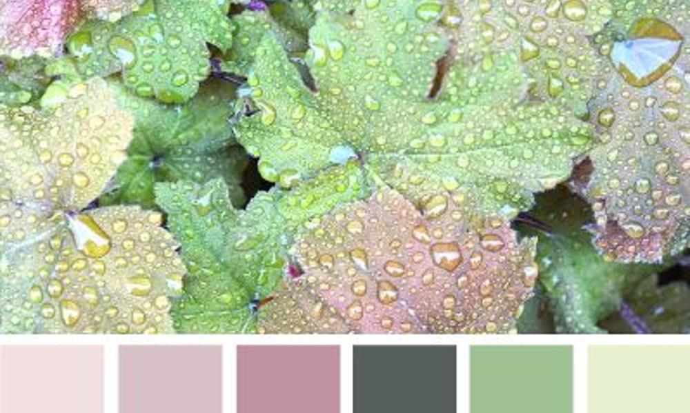 010 color scheme