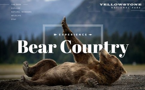 032 Bear Country