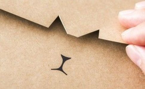 055 cat branding