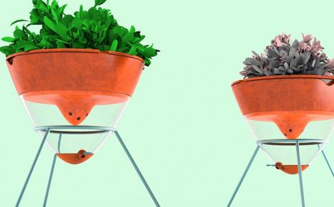 Plantje voor de dorst
