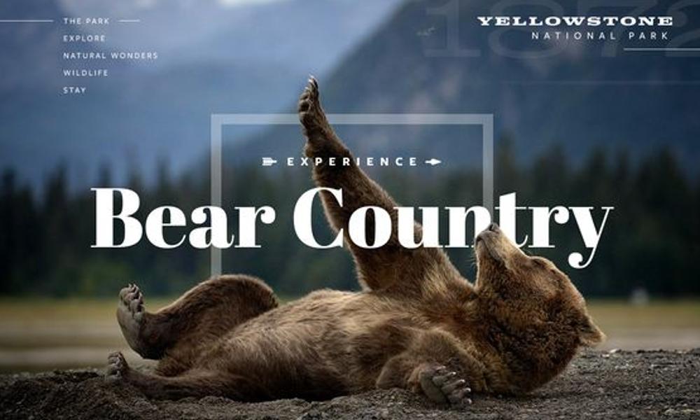 032 Bear Country